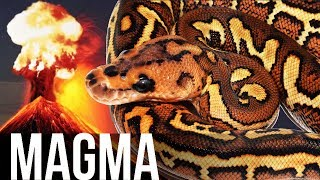 MAGMA Project + POMPEII: The snake that shocked JKR!