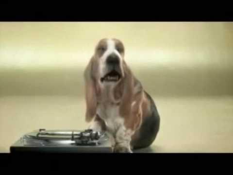 Dj pies - Dj Hund - Dj Dog ;-)