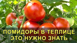 Помидоры в Теплице это Нужно Знать  для Отличного Урожая