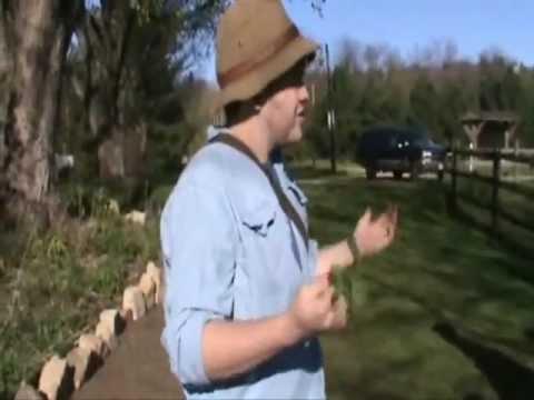 Jewelweed - Wild Medicinal Plant