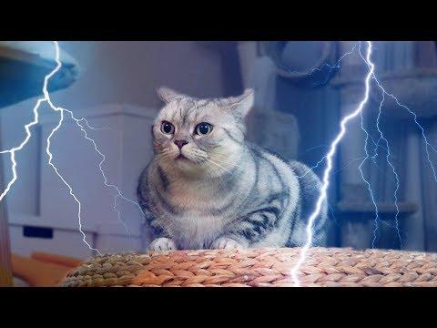 천둥번개가 쳤을 때 고양이들의 반응은?