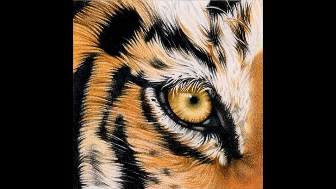 Eye Of The Tiger Pics eye of the tiger - survivor - youtube