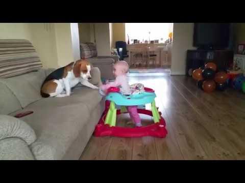 Babysitting Dog Taking Care of Baby