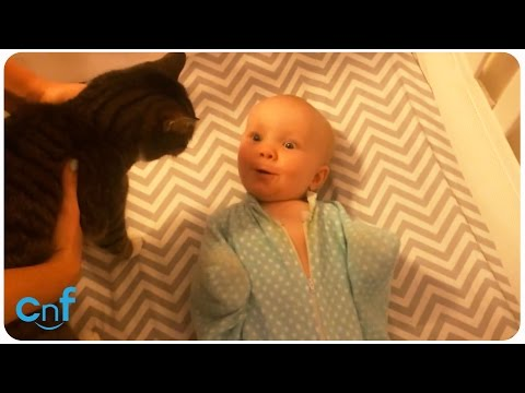 Baby Loves Family Cat | Flappy Babe