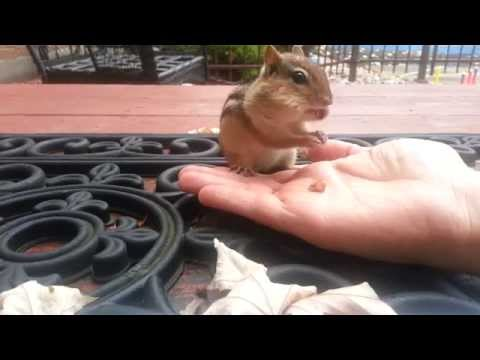 How to feed a chipmunk