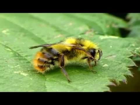 Different Types of Bees - YouTube