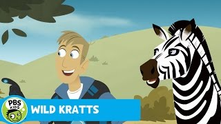 Wild Kratts: Black or White thumbnail