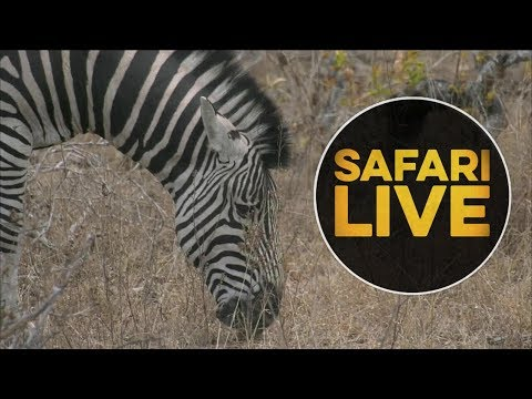 safariLIVE - Sunset Safari - July 17, 2018