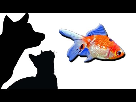 CAT GAMES - FISH TANK SIMULATOR (FOR CATS ONLY)