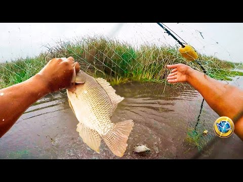 Great fishing with Red Tilapia