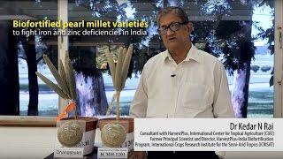 biofortified pearl millet varieties to fight iron and zinc deficiencies in india