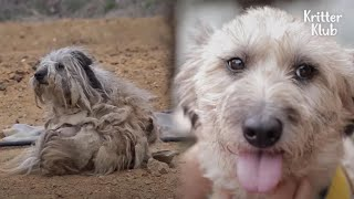 Stray Mother Dog Deals With Sorrow After All Her Puppies Were Adopted (Part 3) | Kritter Klub