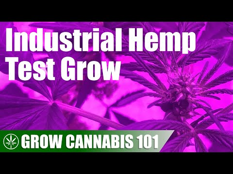 Testing an Industrial Hemp Seed to Harvest Timelapse Grow