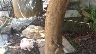 Documentario animali domestici