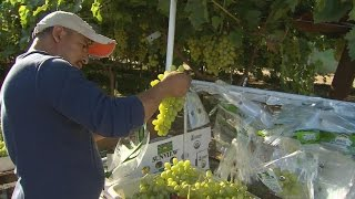 Golden State Farmers Approved for OT