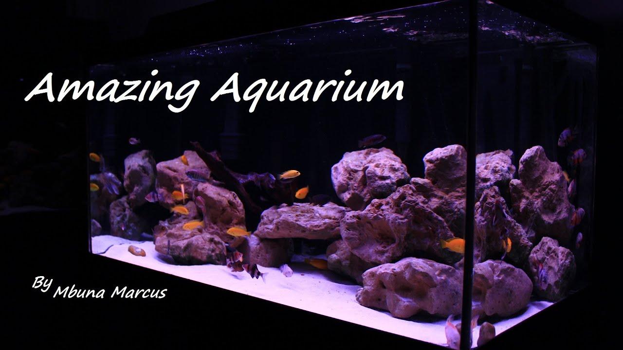 Fish aquarium on youtube - Amazing Fish Tank 55 Gallon Aquarium