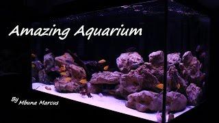 amazing fish tank 55 gallon aquarium