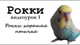 """Учим попугая по имени Рокки говорить, видеоурок 1: """"Рокки хорошая птичка"""""""