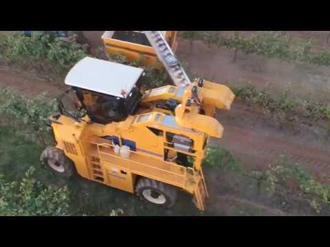 2017 Grape Harvest by B. D. Borth Vineyard Management