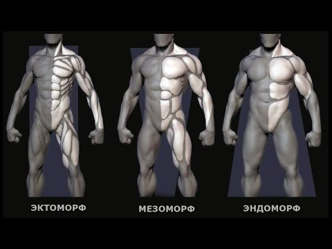 Телосложение. Определение типа телосложения
