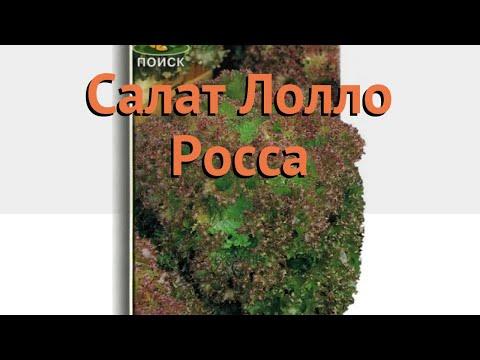 Салат обыкновенный Лолло Росса Листовой 🌿 обзор: как сажать, семена салата Лолло Росса Листовой