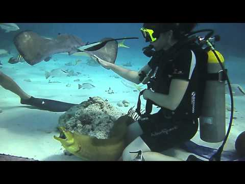 Playing with 'Psycho' the Moray Eel at Sting Ray City.mov