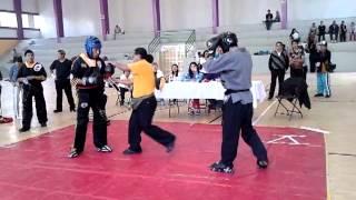 PITBULL VS TIGRES DORADOS
