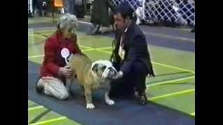 Bulldog Of The Year Uk 1997 Part 1