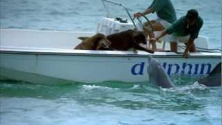 Imax Dolphin Trailer