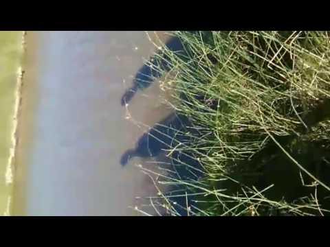 Pesca Falsa(broma a mi hermanito)