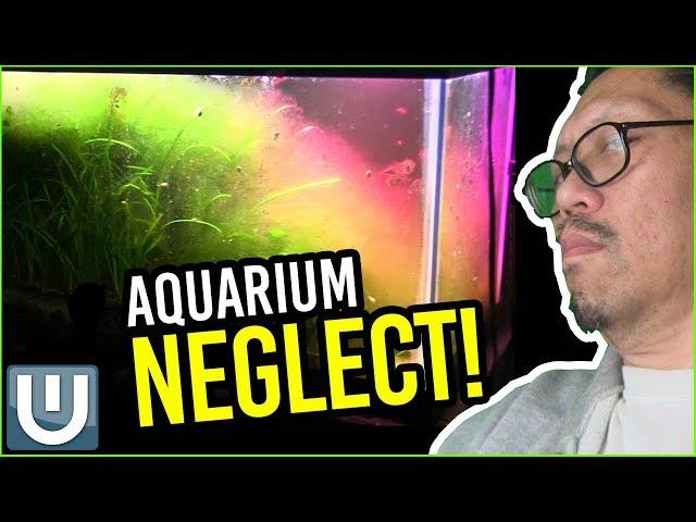 Planted Aquarium Maintenance - Recover from Neglect!   Waterlog 009