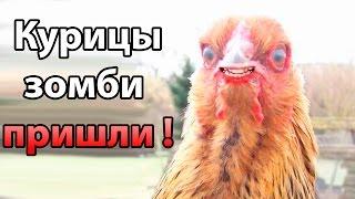 Курицы зомби пришли ! ( Dead Acres )