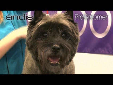 Grooming Guide - Cairn Terrier Pet Trim - Pro Groomer