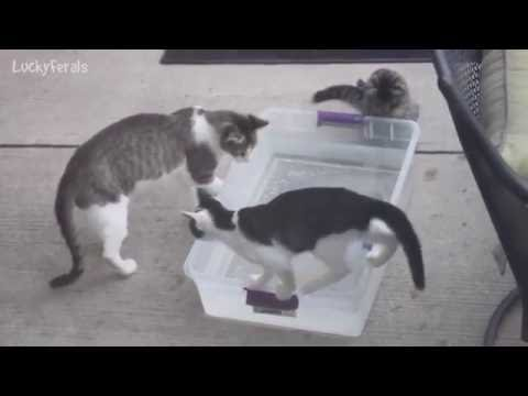 Feral Kittens Playing With Rubber Fish Bath Toy ~ So Cute!