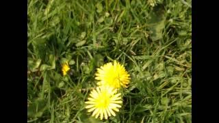 2012-05-01 Beltane with Herb Walk