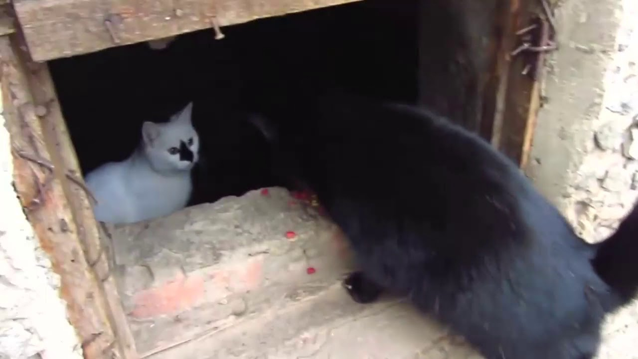Scared cats jumping from basement5 - YouTube