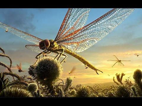 The Biggest Dragonfly Of The Planet - YouTube