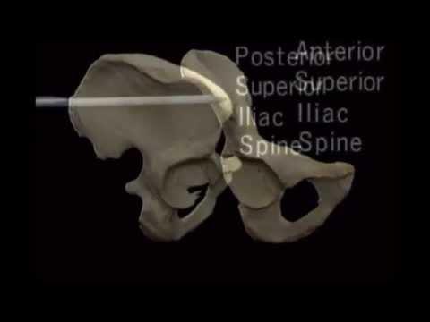 Hip bone anatomy video