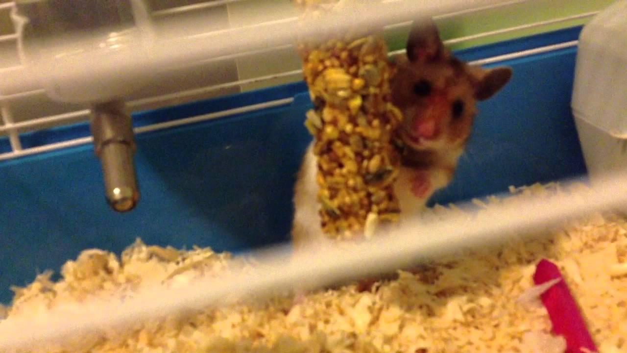 Mr humphrey the movie trailer youtube - Hamster agent secret ...