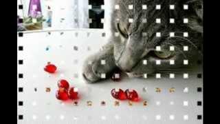 витамины от линьки для кошек
