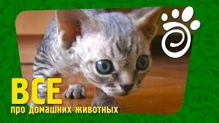 Прикорм Для Котят (Часть Первая).Все О Домашних Животных