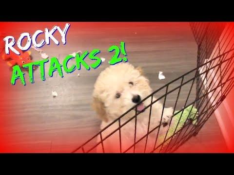 Rocking With Rocky :