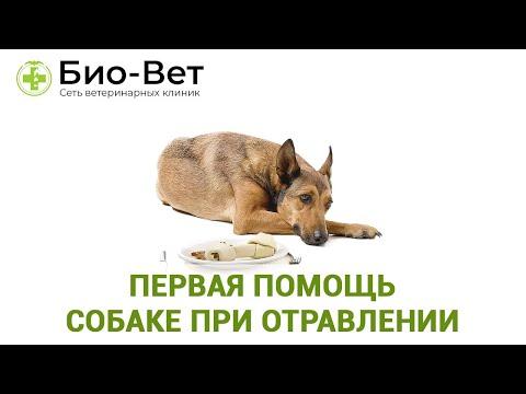 Сколько дней собака болеет при отравлении