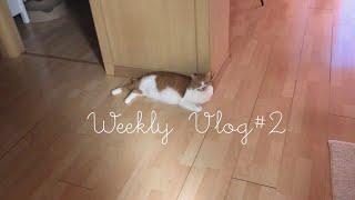 Weekly Vlog …
