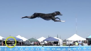 Legendary dog Spitfire is breaking records in the sport of dock diving | Outside the Lines
