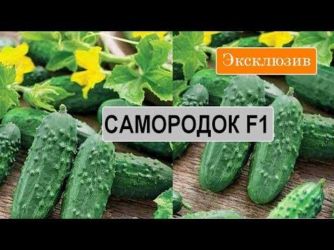 Высокоурожайные Сорта Огурцов В Украине