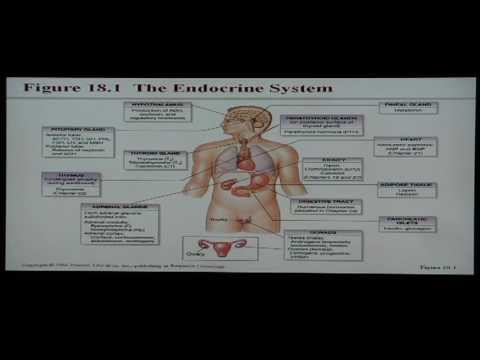 Anatomy and Physiology Help: Chapter 18 Endocrine System