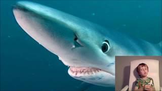 Синяя Акула (Blue Shark)