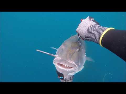 Job Fish Murder