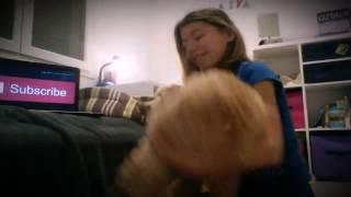 Я и собака(, 2016-11-05T20:05:37.000Z)